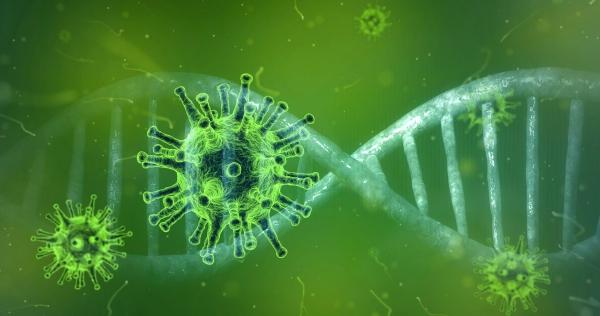 Coronavirus en dieren